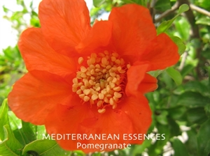 med pomegranate
