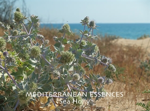 med sea holly